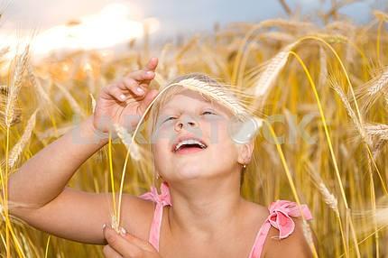Little girl in a wheat field.