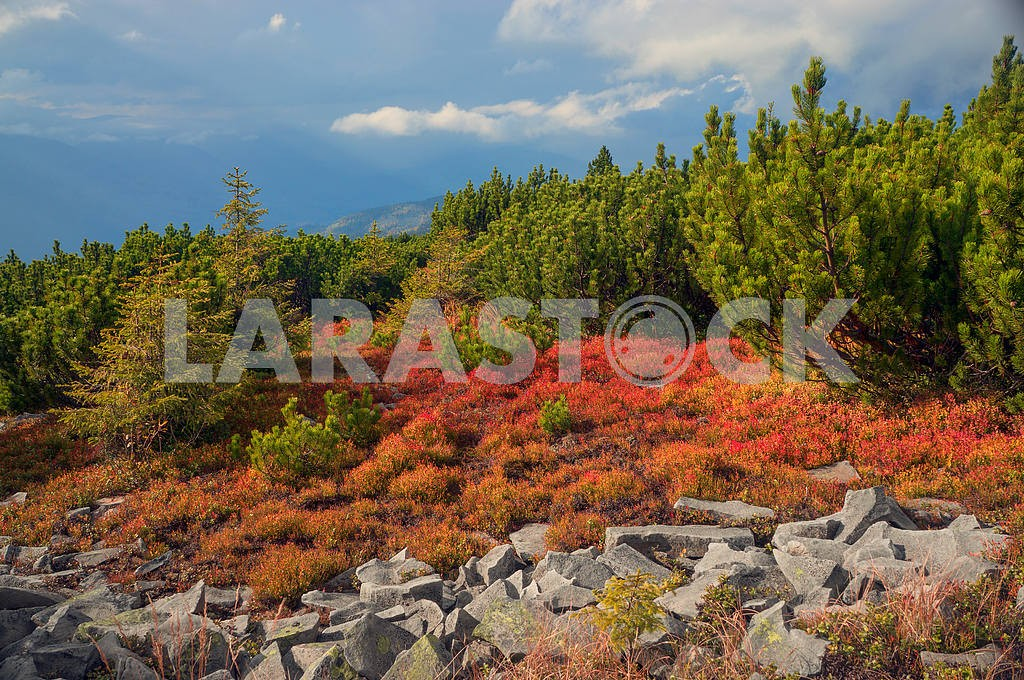 Alpine autumn in Gorgany — Image 11787