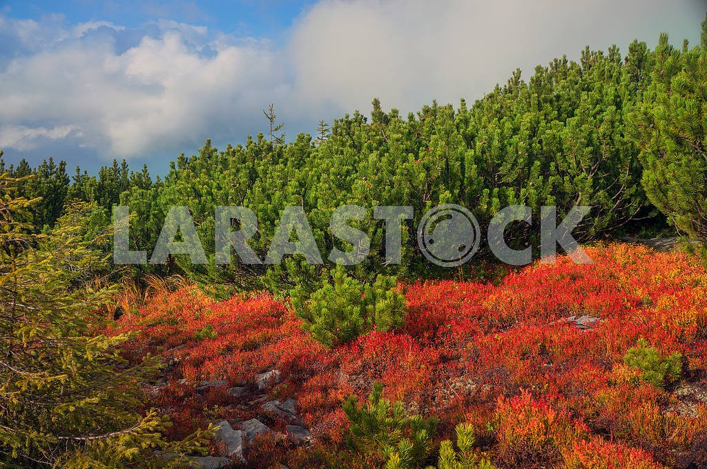 Alpine autumn in Gorgany — Image 11788