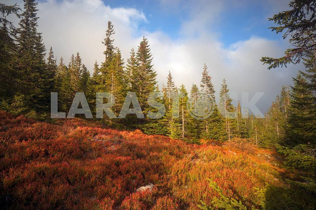 Alpine autumn in Gorgany — Image 11794