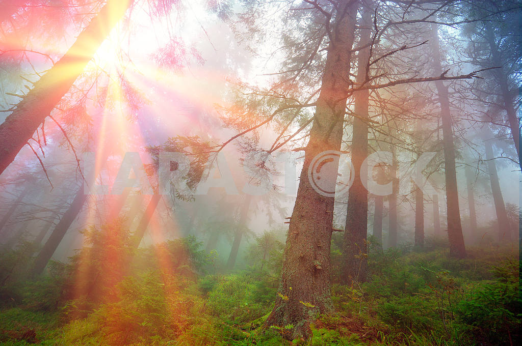 Rays in the Carpathian forest — Image 11862