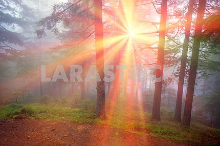 Rays in the Carpathian forest