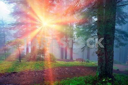 Лучи в карпатского леса