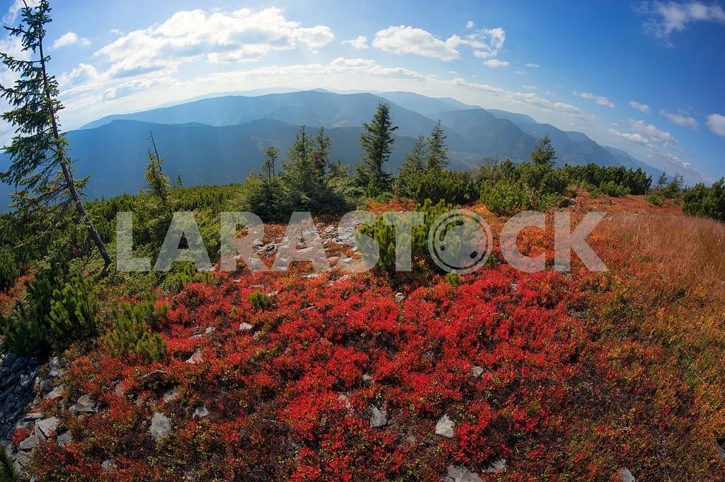 Alpine autumn in Gorgany — Image 11880