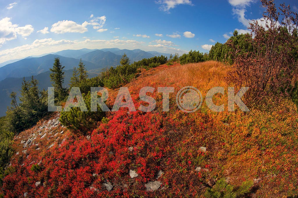 Alpine autumn in Gorgany — Image 11881