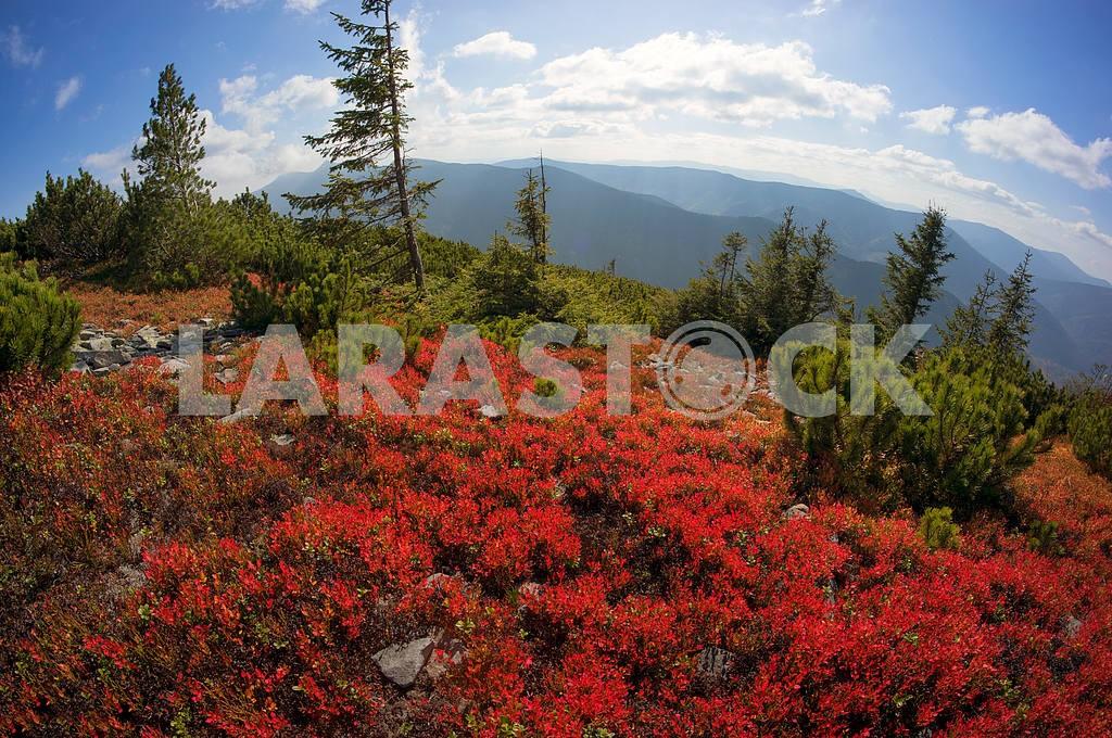 Alpine autumn in Gorgany — Image 11882