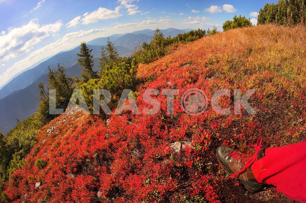 Alpine autumn in Gorgany — Image 11884
