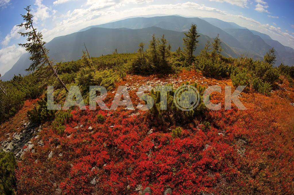 Alpine autumn in Gorgany — Image 11885