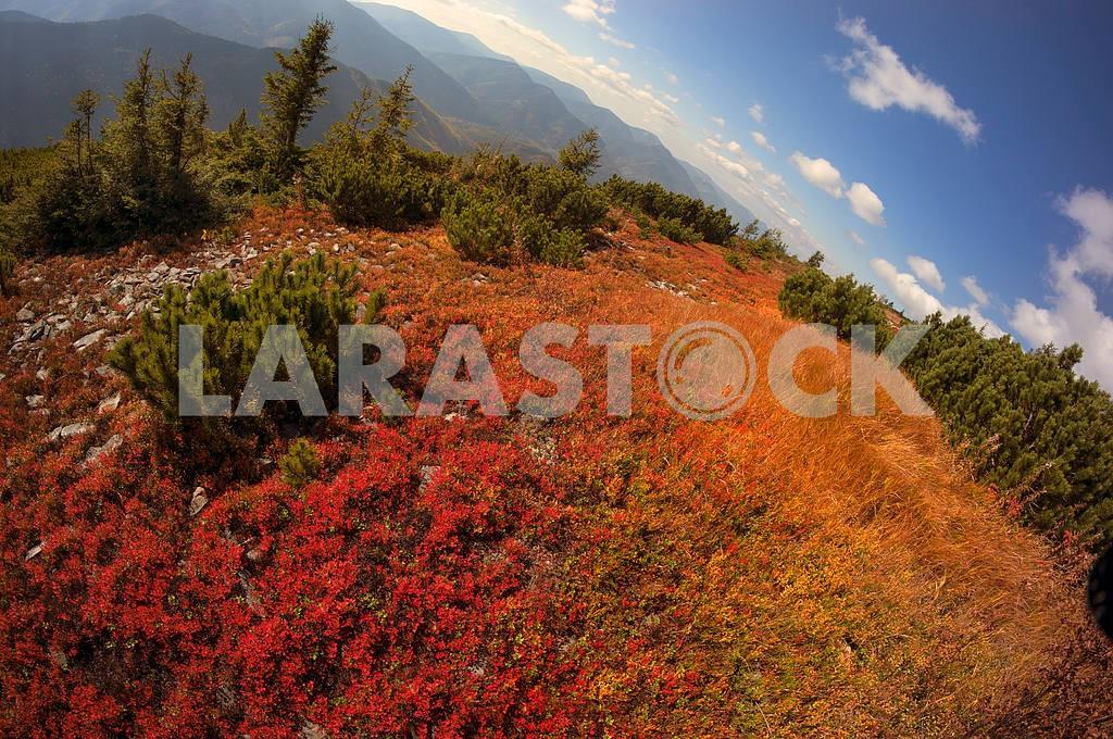 Alpine autumn in Gorgany — Image 11886