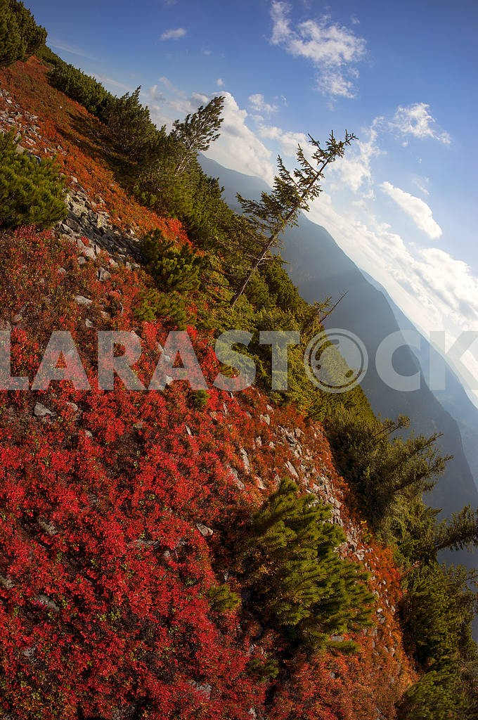 Alpine autumn in Gorgany — Image 11887