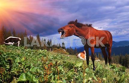 Horse celebrates