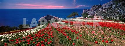 Рассветы и закаты с тюльпанами в Крыму