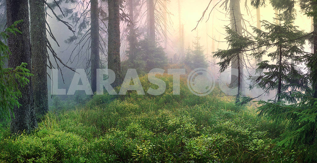 Misty forest. — Image 12025