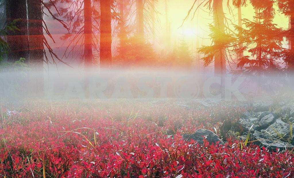 Fog in autumn wood — Image 12026