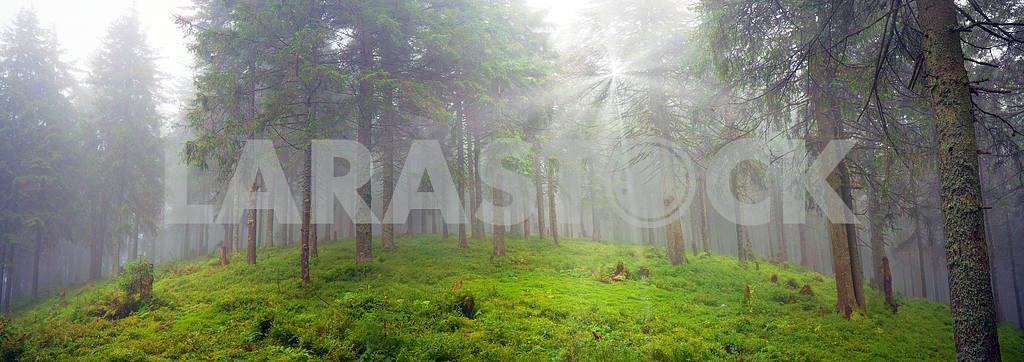 Radiance misty forest — Image 12046