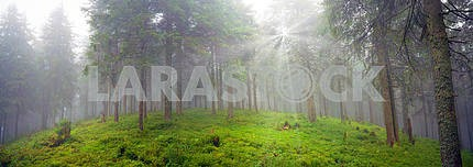 Radiance misty forest
