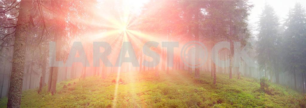 Radiance misty forest — Image 12051