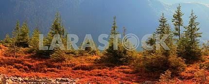 Alpine autumn in Gorgany