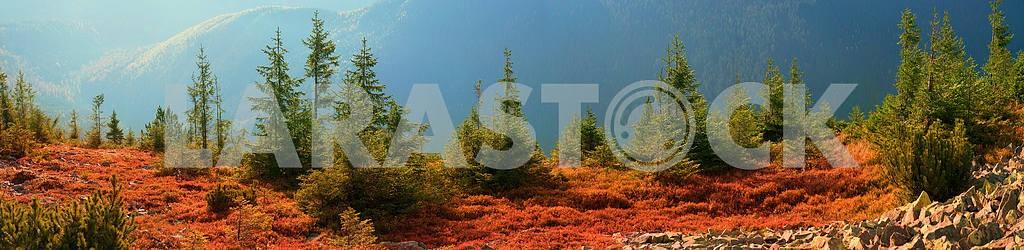 Alpine autumn in Gorgany — Image 12057