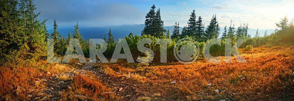 Alpine autumn in Gorgany — Image 12066