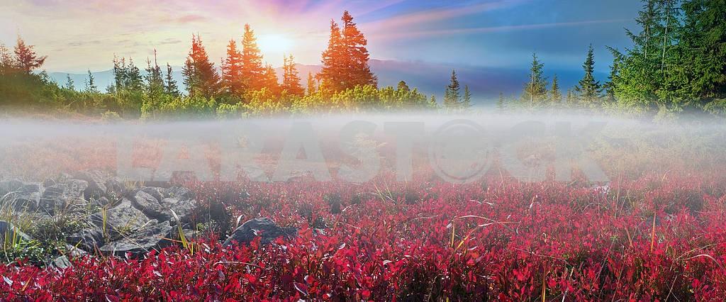 Alpine autumn in Gorgany — Image 12067