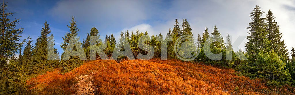 Alpine autumn in Gorgany — Image 12086