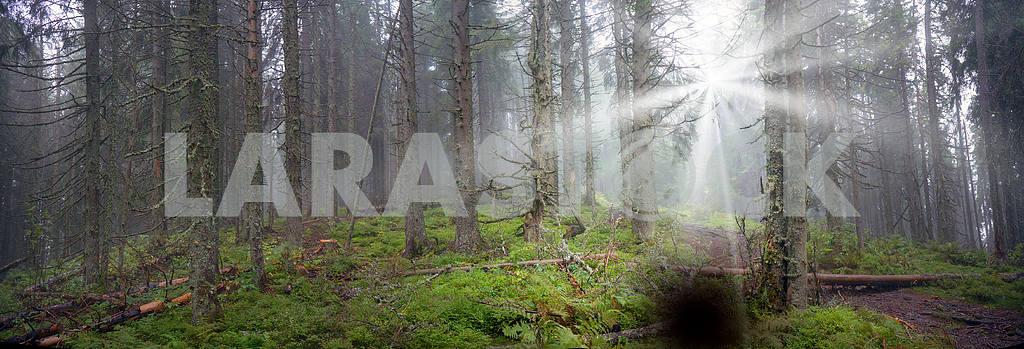 Сияние туманные леса — Изображение 12093