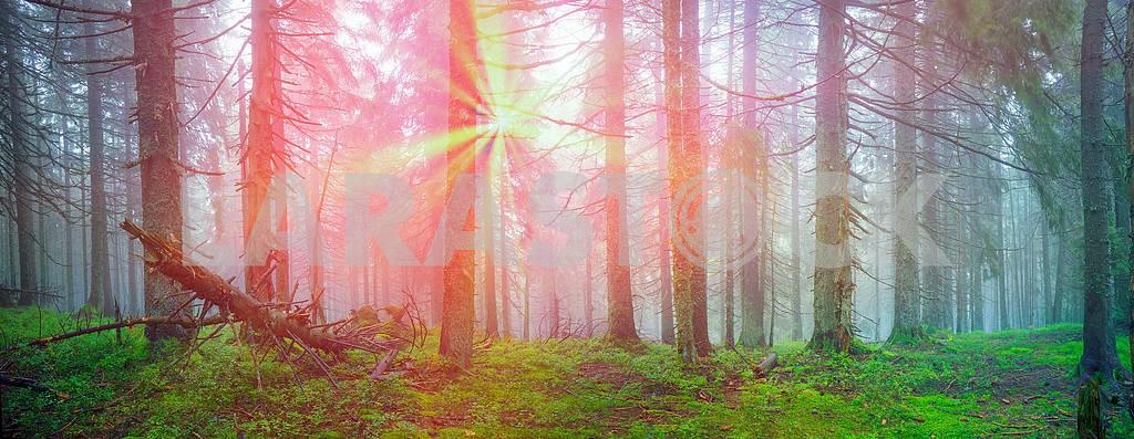 Сияние туманные леса — Изображение 12105