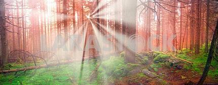 Сияние туманные леса