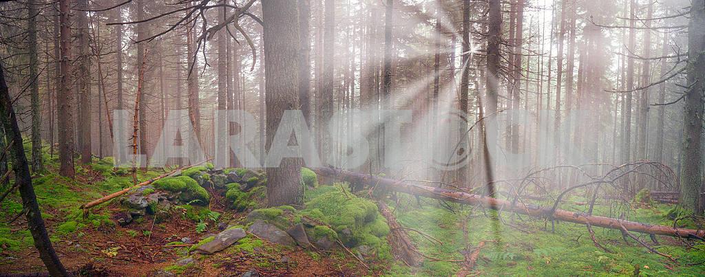 Сияние туманные леса — Изображение 12111