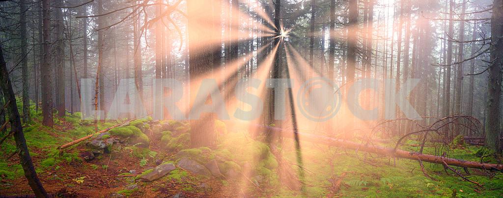 Сияние туманные леса — Изображение 12112