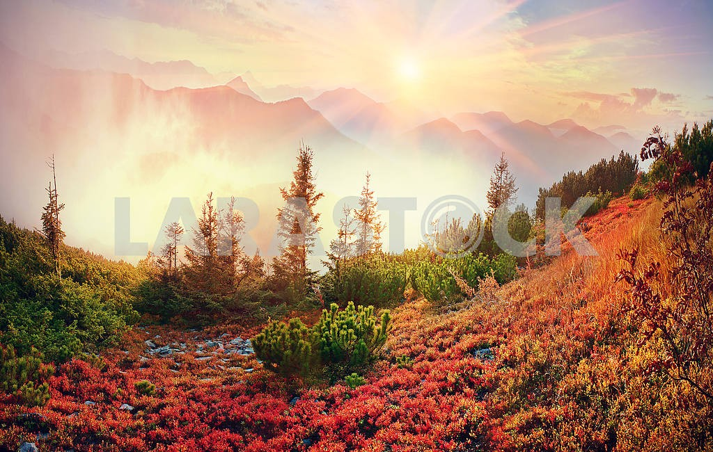 Alpine autumn in Gorgany — Image 12140