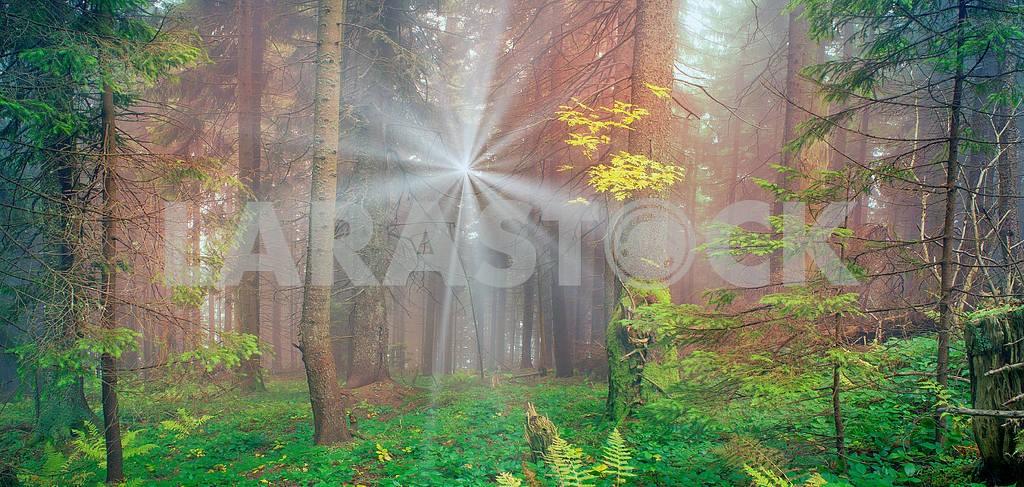Сияние туманные леса — Изображение 12154