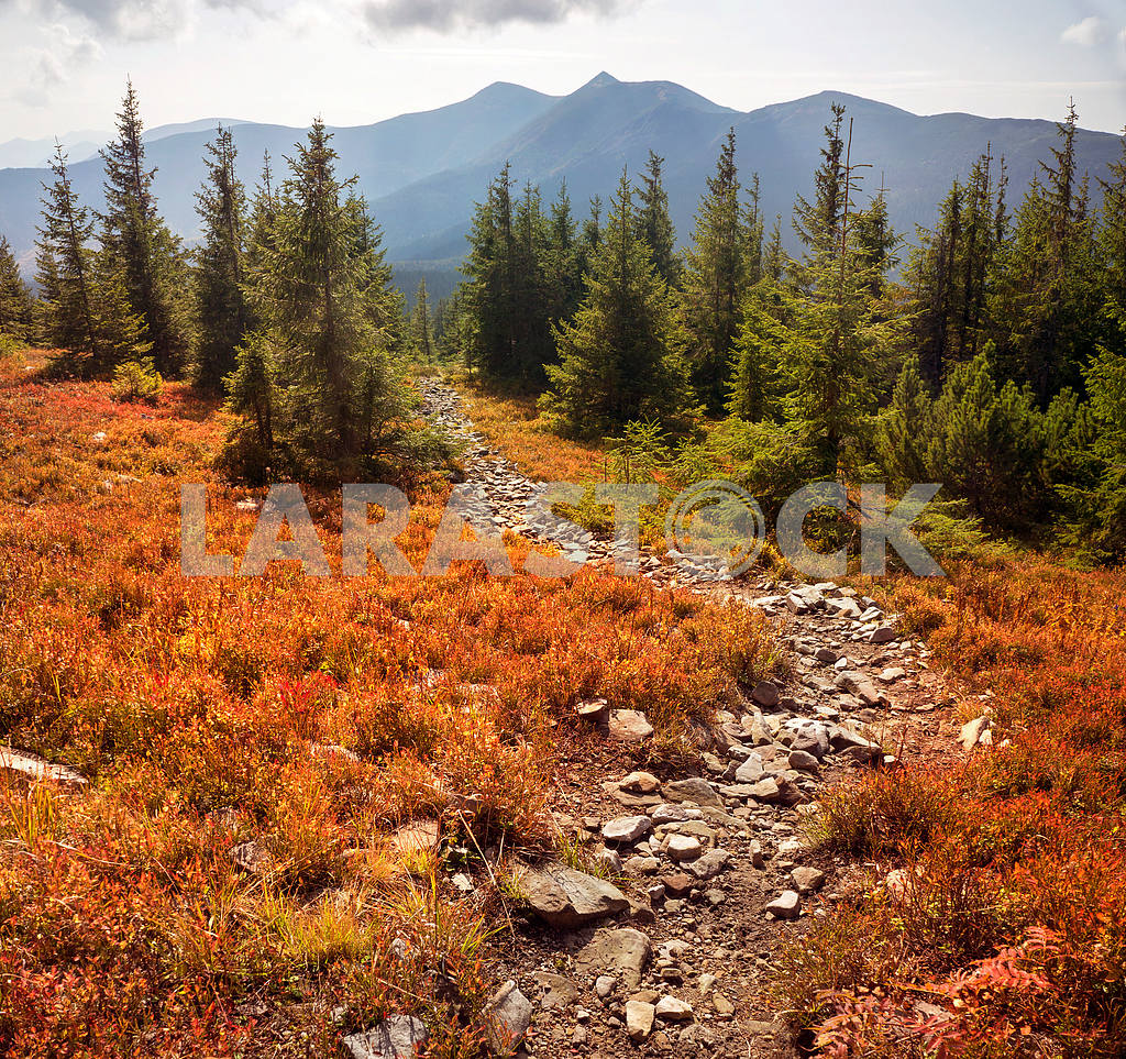 Alpine autumn in Gorgany — Image 12166