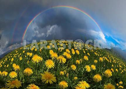 Поляна Весна и летние цветы