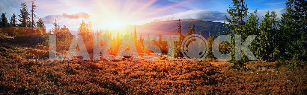 Alpine autumn in Gorgany — Image 12198