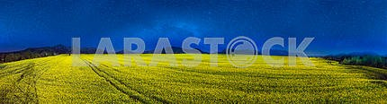 Yellow rapeseed field under a bright