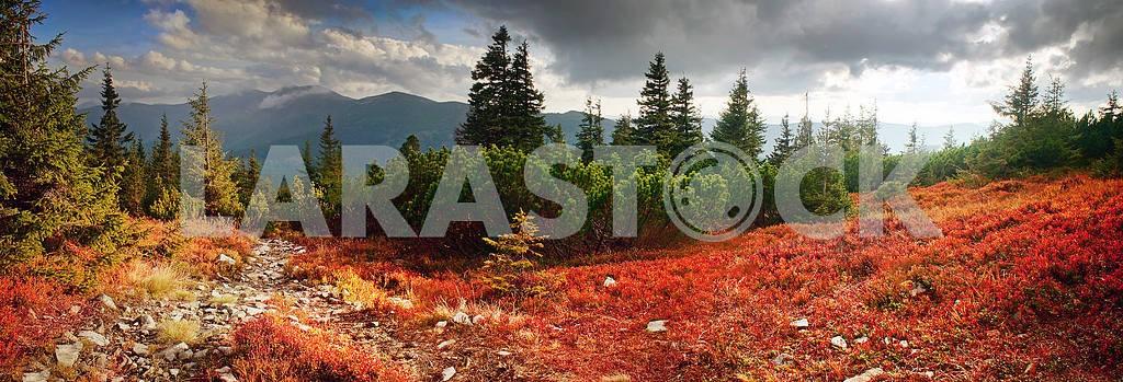 Alpine autumn in Gorgany — Image 12225