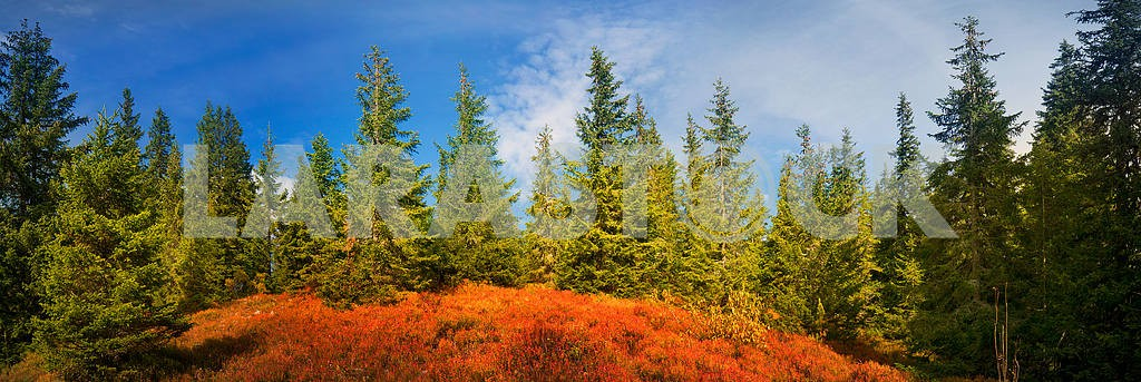 Alpine autumn in Gorgany — Image 12230