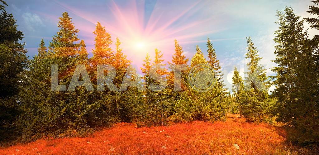 Alpine autumn in Gorgany — Image 12231