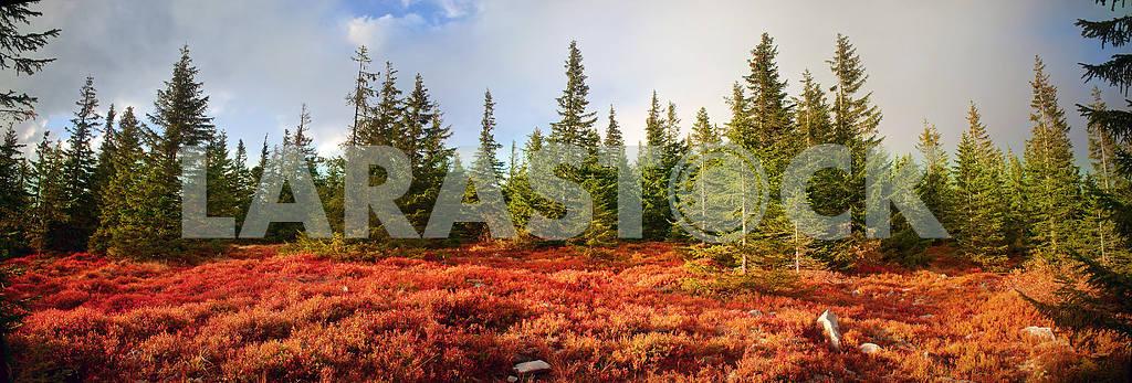 Alpine autumn in Gorgany — Image 12237