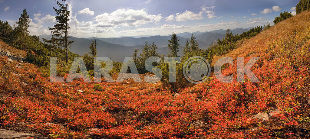 Alpine autumn in Gorgany — Image 12247