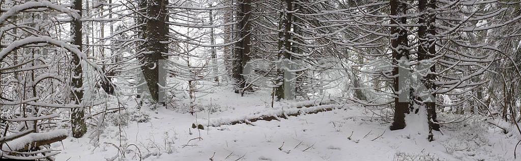 Альпийский является климат