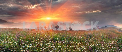 panorama of mountain meadows in Transcarpathia