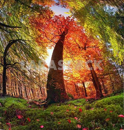 Autumn forest in Ukraine