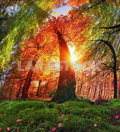 Осенний лес в Украине