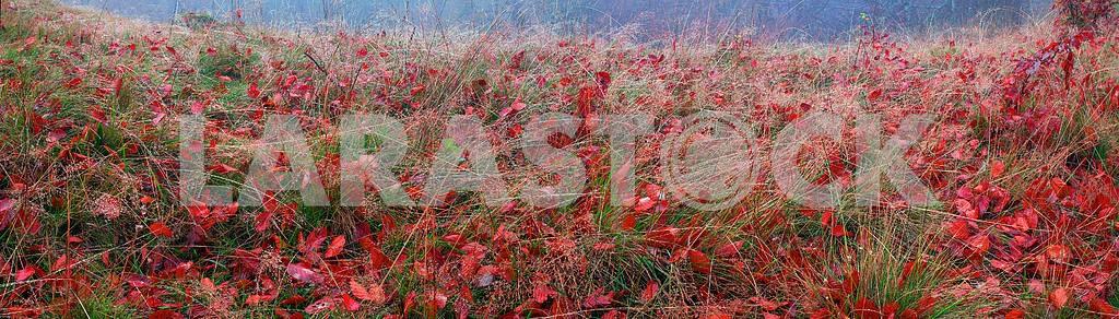 Autumn grass — Image 12679