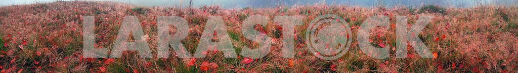 Autumn grass — Image 12680