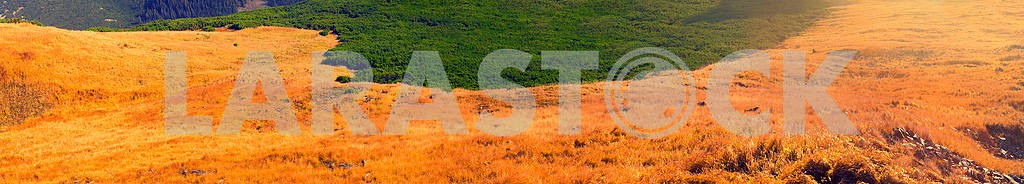 Autumn grass — Image 12731