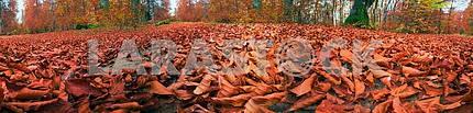 Fallen сухие листья в осеннем лесу